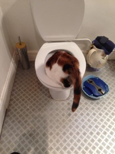 Is that a ghost in the toilet, or a cat?