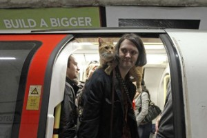 This cat, being a boy, struggles with the ticket machines