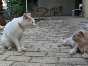 stroppy cats