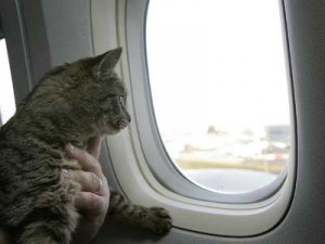 Cats on planes? Great idea