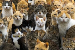 Armies of cats are coming to get you