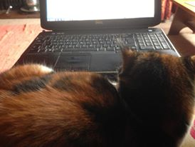 Why are laptops so appealing to cats?